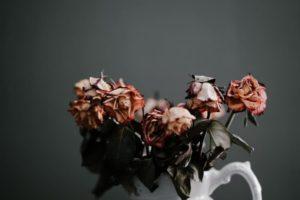 枯れた花のイメージです