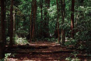森の写真です