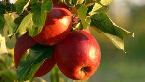 恋あたセブンイレブン第二弾はリンゴのプリン